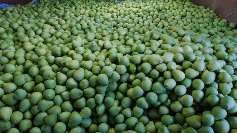 幾個你對文旦的誤解-花蓮鶴岡文旦等於台南麻豆文旦?柚子等於文旦?
